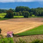 登記簿の地目が山林、評価証明書の課税地目が畑の場合の農業委員会の許可